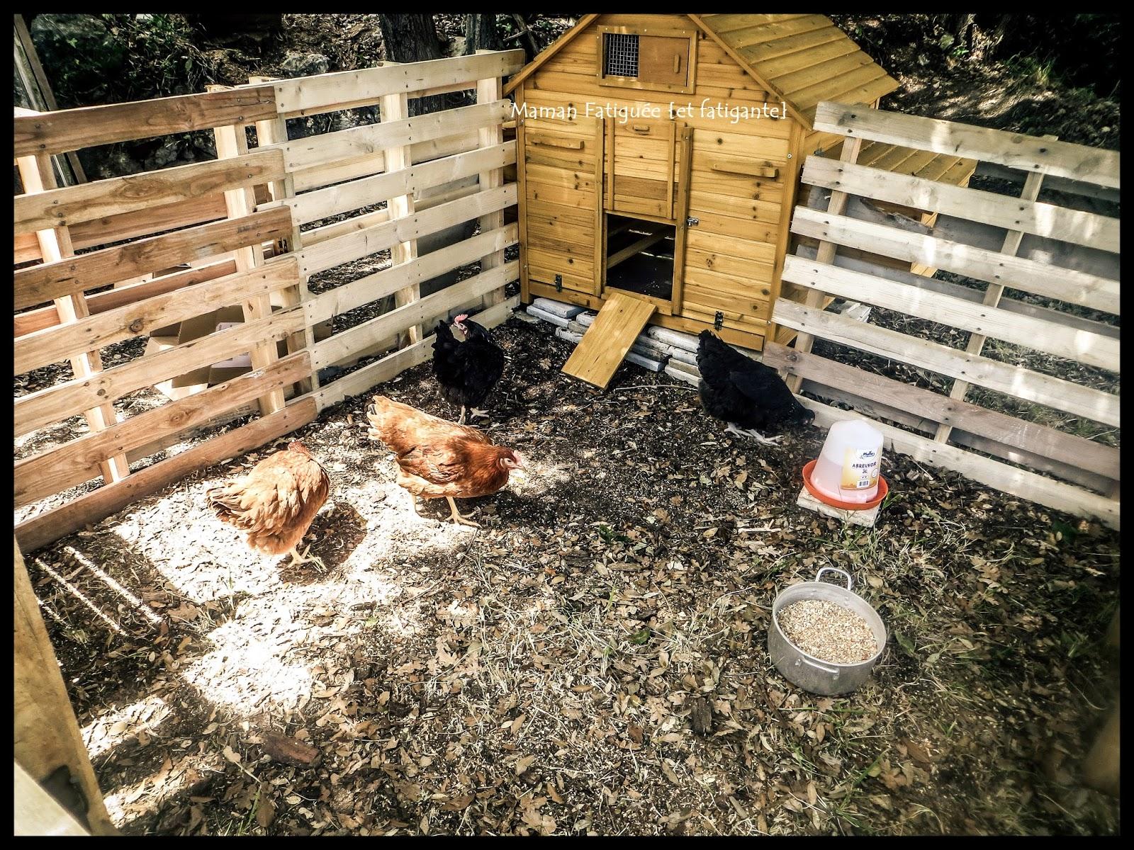 nouvelles locataires les poules maman fatigu e et fatigante. Black Bedroom Furniture Sets. Home Design Ideas