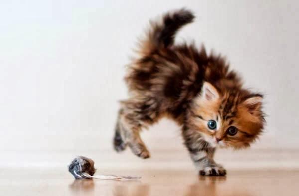 Игрушка для котенка