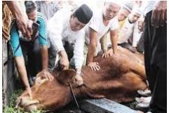 Tata Cara Penyembelihan Hewan Qurban Sesuai Sunnah Rasulullah SAW.