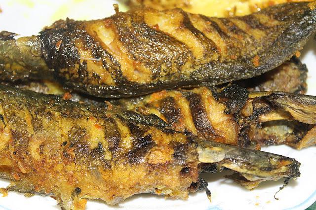Ikan Keli Lembut