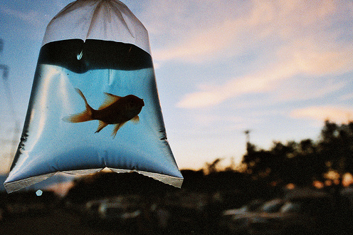 Resultado de imagem para me sinto um peixe fora d'água