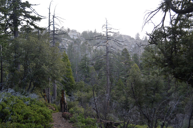 foggy rocky forest