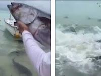 Tuna Dilempar ke Kawanan Ikan Karnivora, Yang Terjadi Mengerikan