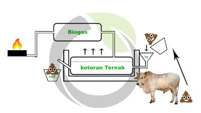 Skema proses pembuatan Biogas dari kotoran ternak