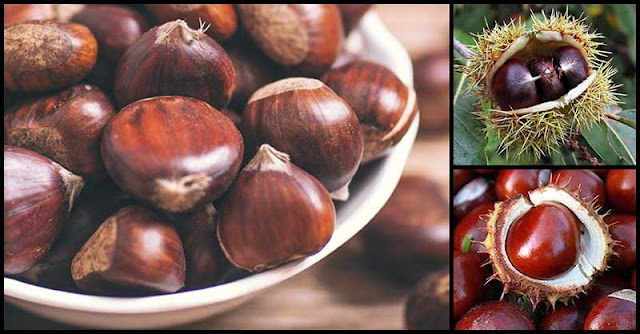 Help Improve Digestion, Manage Blood Pressure, And Increase Energy Levels With Chestnuts