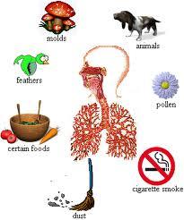 Penyebab Penyakit Asma