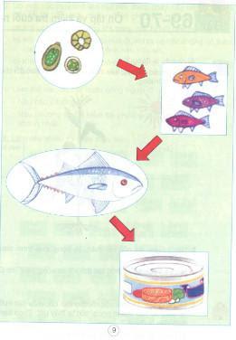 Giải bài tập SGK Khoa học 4 bài 67, 68: Ôn tập thực vật và động vật