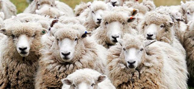 insomnio contar ovejas pastillas tratamiento