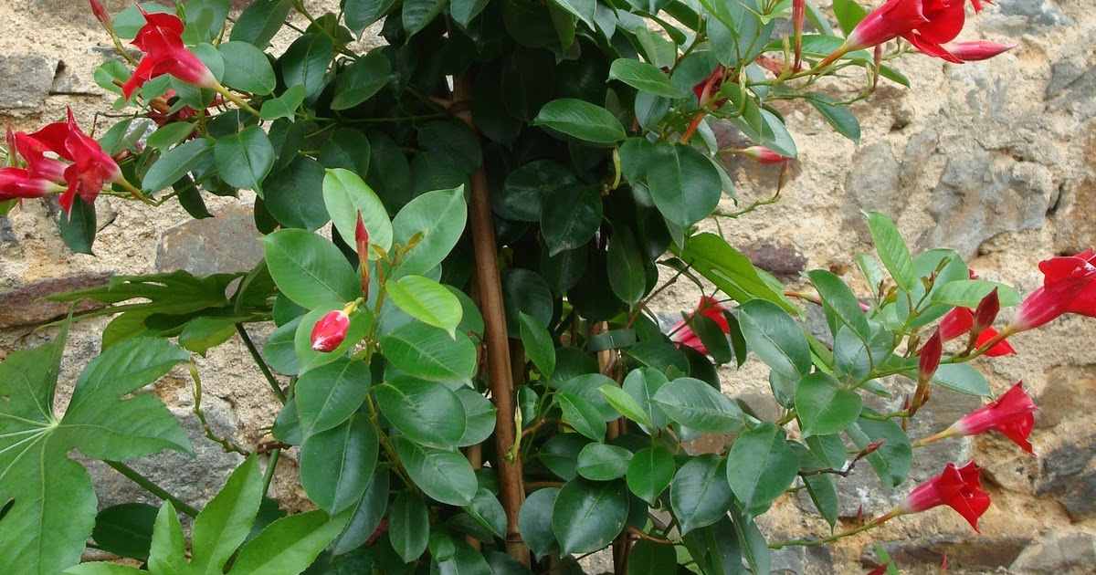 fleuriste isabelle feuvrier les plantes de mon jardin en novembre. Black Bedroom Furniture Sets. Home Design Ideas