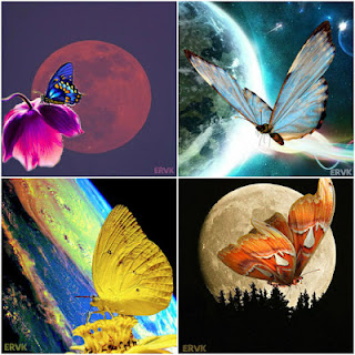 LAMINAS EARTH AND BUTTERFLY COLLAGE