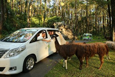 Wisata di taman safari prigen pasuruan jawa timur