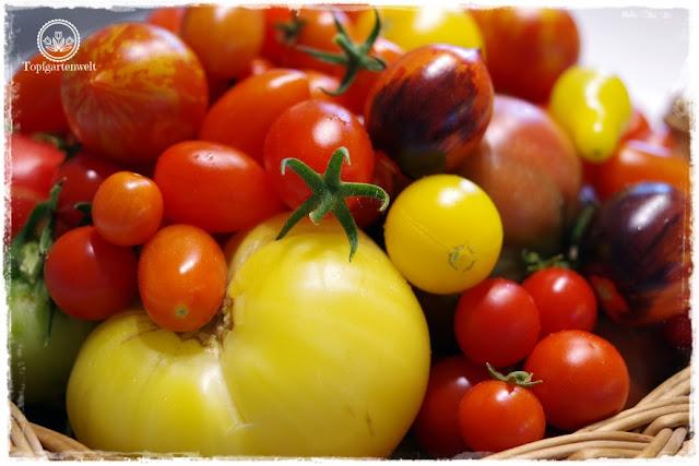 Gartenblog Topfgartenwelt Tomaten Tomatenanbau in großen Töpfen und Trögen: Pflanzgefäße für Tomaten