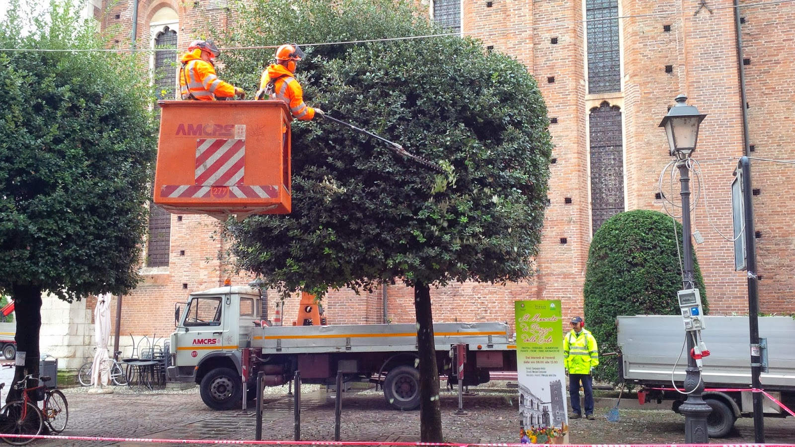The trees in Vicenza are getting a trim