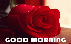 Good Morning Red Rose Photo