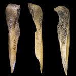 alat dari tulang