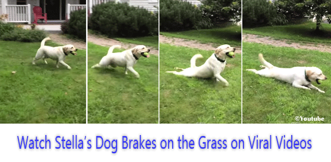 Watch Stella's Dog Brakes on the Grass on Viral Video