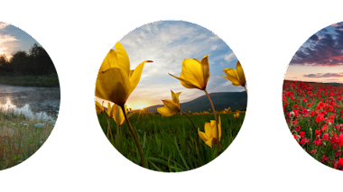 Paisajes de flores silvestres. Wildflower Landscapes IGPOTY N.8