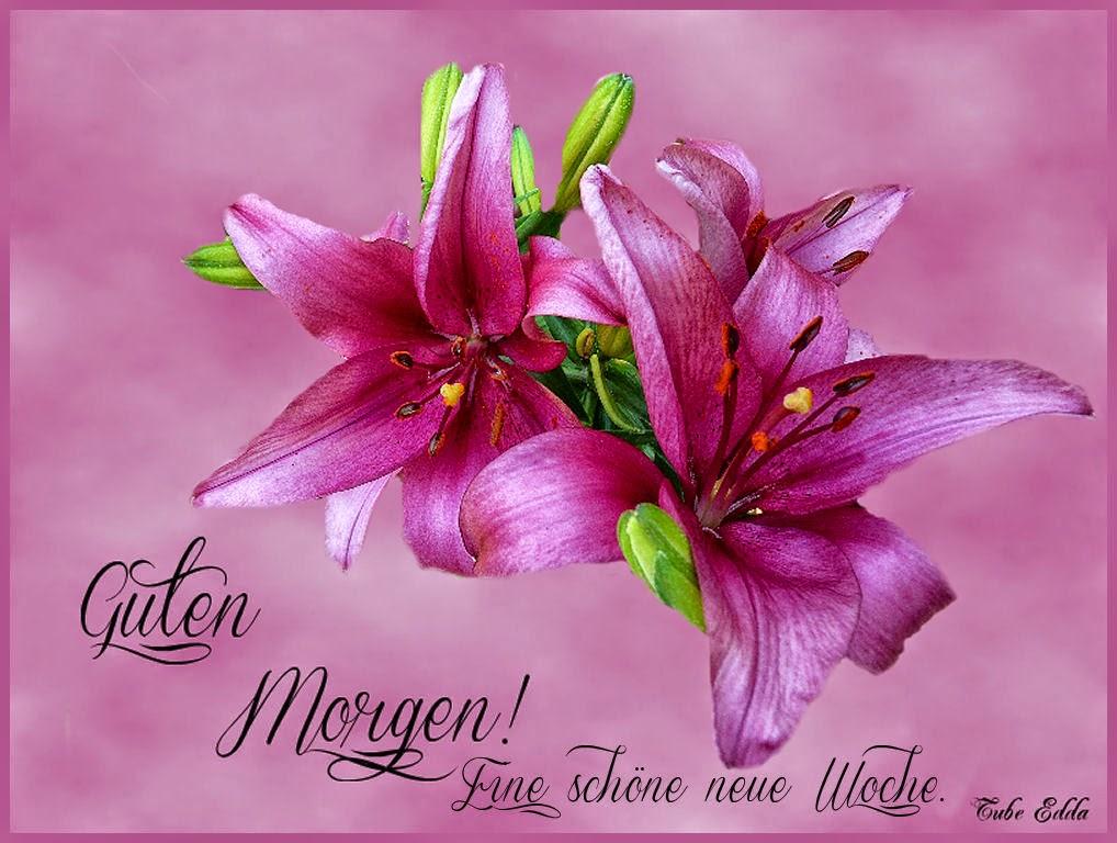 Guten Morgen Schöne Neue Woche Schãne Ich Wã¼nsche Dir