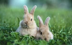 ciri-ciri induk kelinci berkualitas