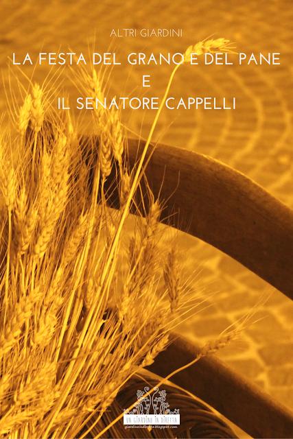 la festa del grano e del pane e il Senatore Cappelli - un giardino in diretta
