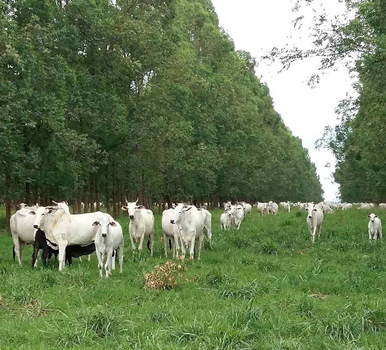 """""""Não tem uma categoria profissional no Brasil que preserve mais o meio ambiente do que o produtor rural"""""""