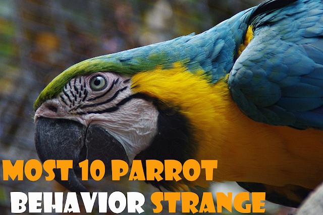 most ten parrot behavior strange