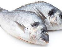 Penggunaan Waring Ikan Menjadi Solusi Jitu Untuk Budidaya Ikan Kakap Putih