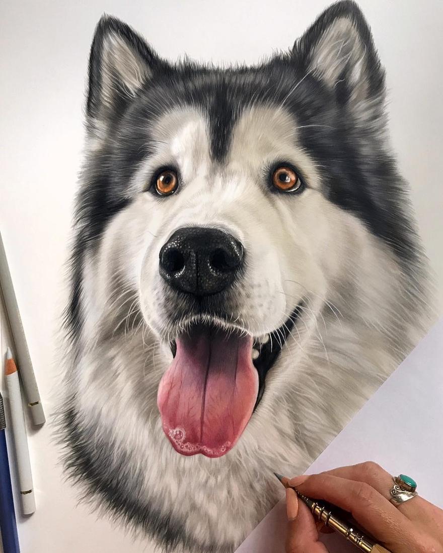 04-Roko-Kelly-Lahar-Realism-with-Animal-Portrait-Drawings-www-designstack-co