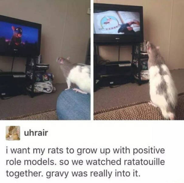 I want my rats to grow up with positive role models. So we watched ratatouille together. gravy was really into it.