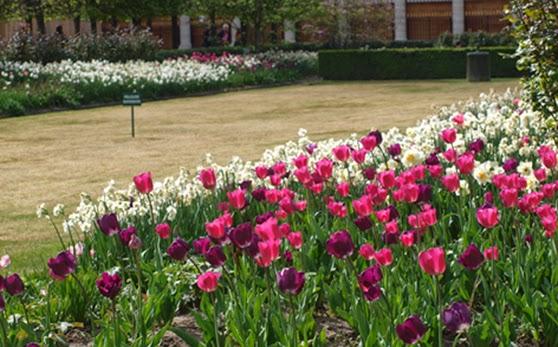 Tulipaner i massevis i en af Paris's dejlige parker