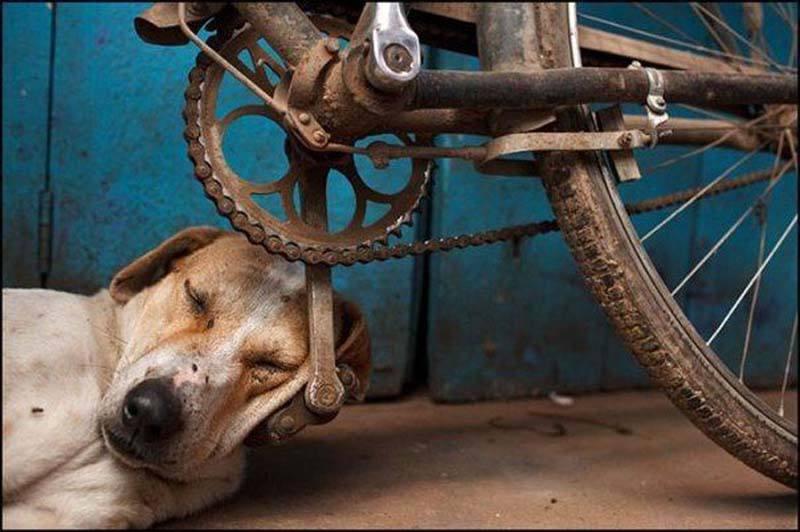 increibles-fotos-alrededor-planeta-mundo-imagenes-animales-personas__034.jpg