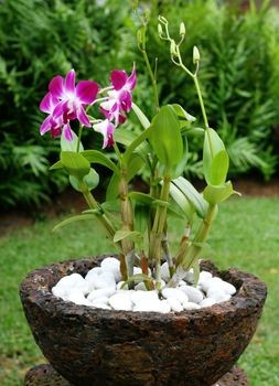 How to RePot an Orchid: A Beginners Guide