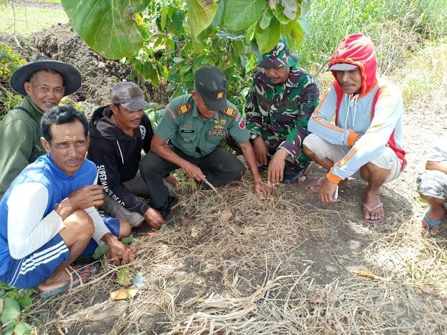 Warga Desa Pallimae  Temukan Granat Aktif , Danramil Sabbangparu Turun Amankan Lokasi