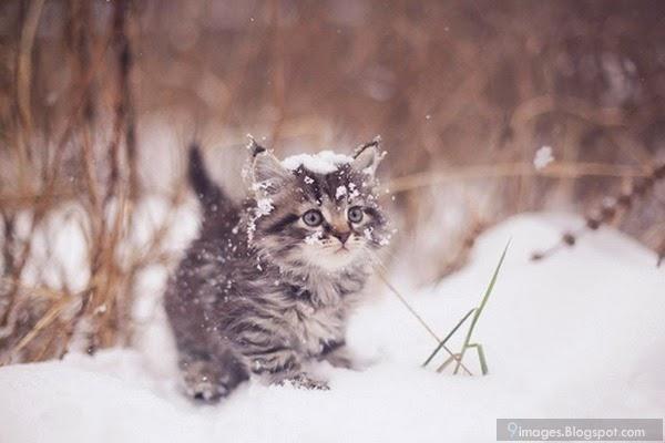 Sad Anime Boy Wallpaper Beautiful Alone Cat Kitten Snow Fall