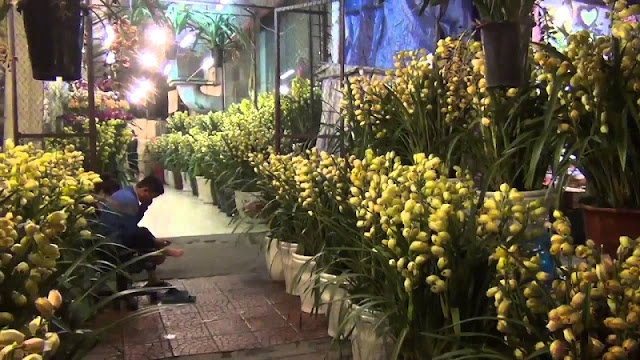 Six famous Tet flower markets in Hanoi 4