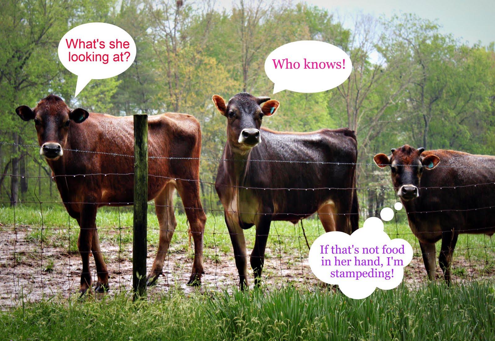 Funny Farm Animal Friday
