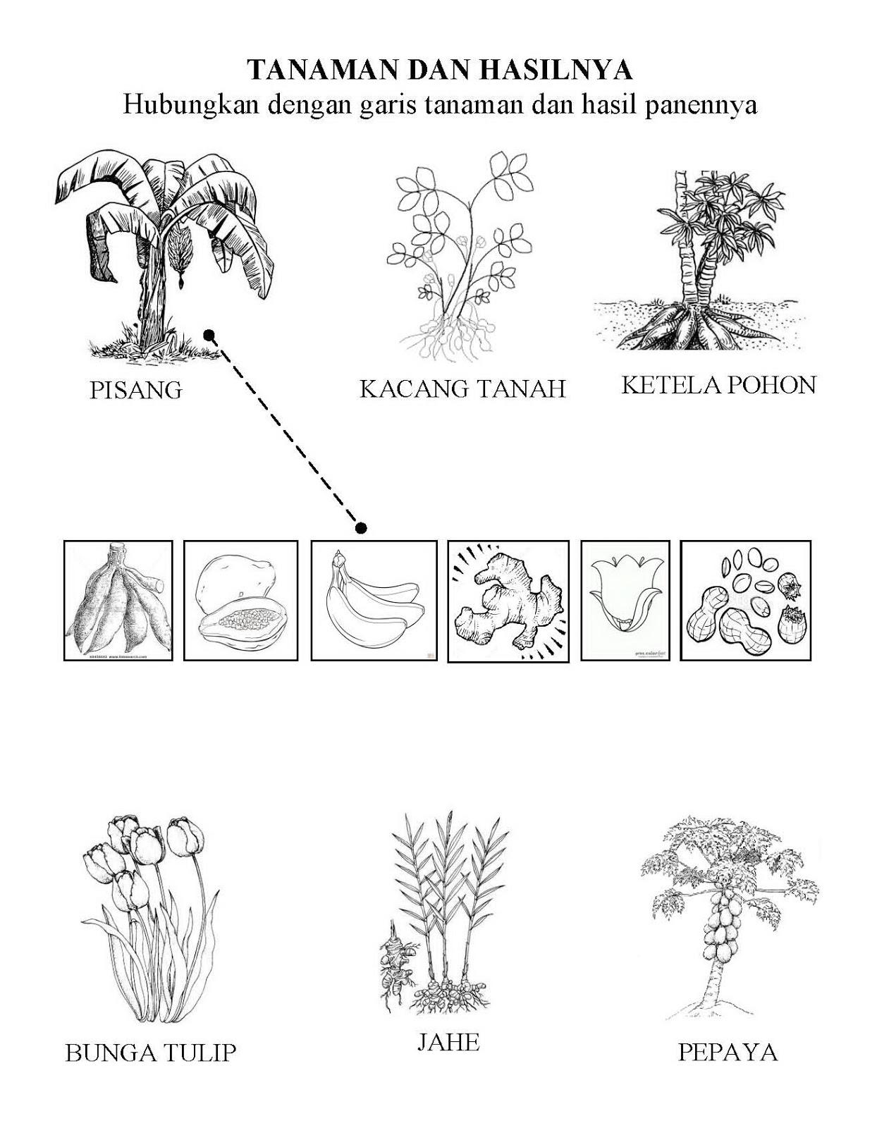Kumpulan Gambar Untuk Belajar Mewarnai Mewarnai Gambar