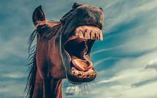 Denti del cavallo
