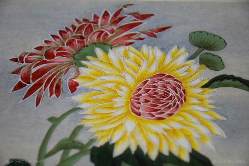 Chrysanthemum morifolium. Detalle calendario 2017 Real Jardin Botánico | Colección Van Berkhey