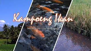 wisata air, wisata ikan, kampung ikan, wisata banyuwangi, kampung ikan banyuwangi,