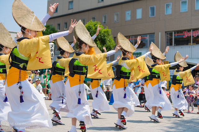 天狗連、熊本地震被災地救援募金チャリティ阿波踊り、女踊りの写真 2