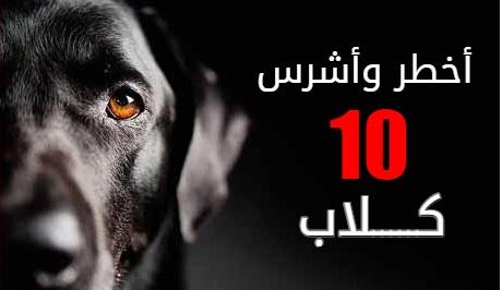 أخطر اشرس  10 كلاب في العالم بالصور