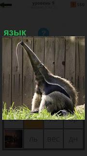 на траве сидит животное высоко подняв шею и высунув длинный язык