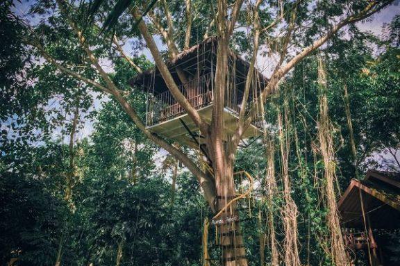 Rumah Pohon Taman Botani Sukorambi Jember