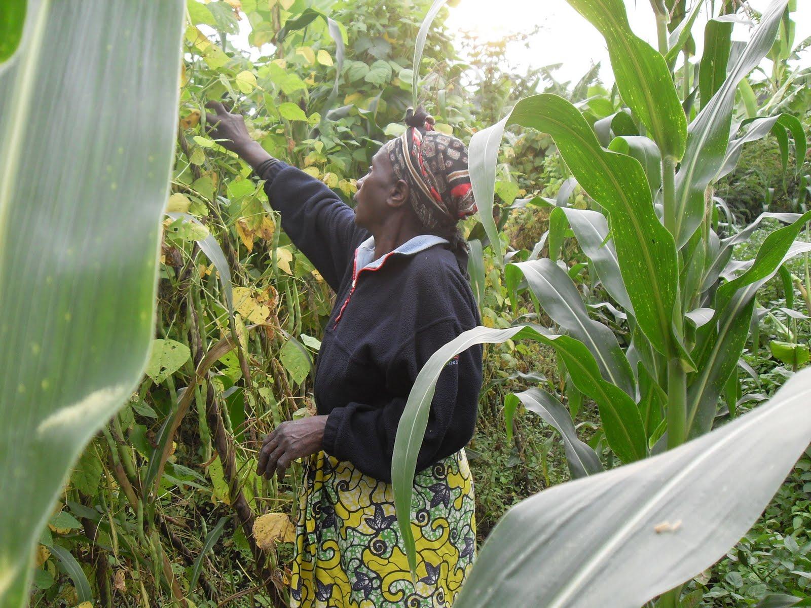 Ochieng' Ogodo online: Climbing beans changing Rwanda's