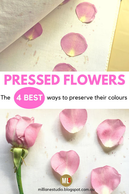 Pressed pink rose petals compared with fresh pink rose petals inspiration sheet