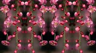 I fiori più belli del mondo