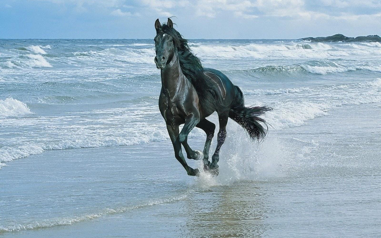 Hd Hintergrundbilder Pferde Araber Am Meer Am Strand