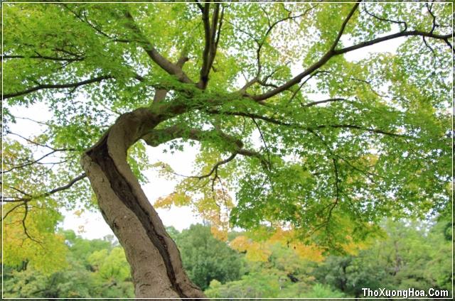 thơ mùa thu tình yêu và nỗi nhớ