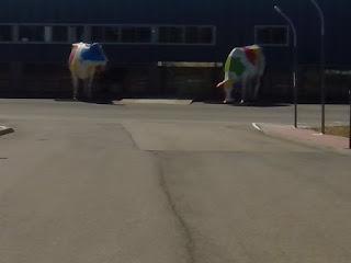 Vacas Gigantes oscenses Eboca